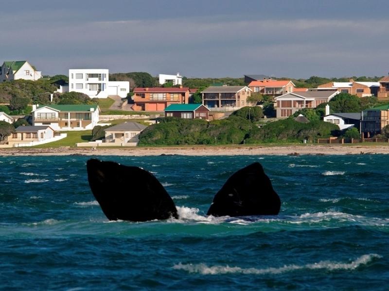 southern-right-walvissen-in-gansbaai