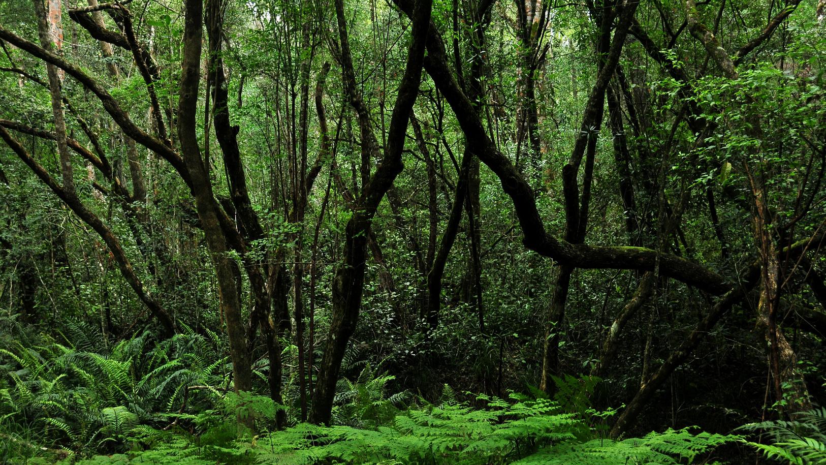 tsitsikamma-nationalpark-goesa-trail