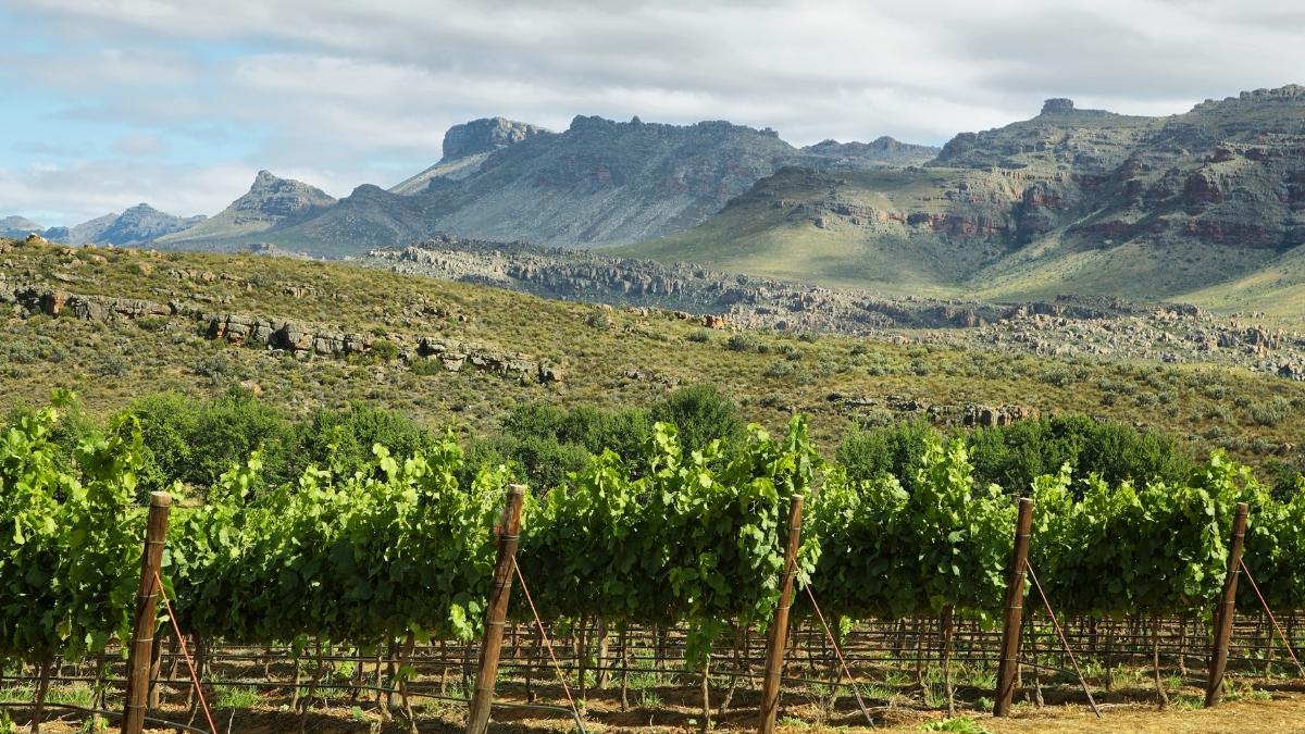 vineyards-cederberge-south-africa