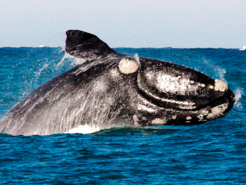 walvissen spotten in zuid afrika
