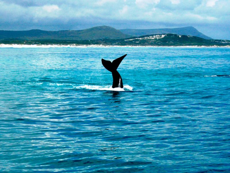 walvissen-spotten-zuid-afrika