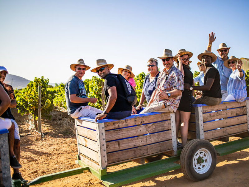 wine-tasting-in-the-vineyards-south-africa