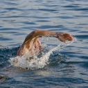 zwemmen-in-zee-kleine-icon