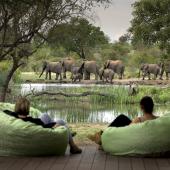 Bekijk de waterpoel tijdens safari in Zuidelijk Afrika