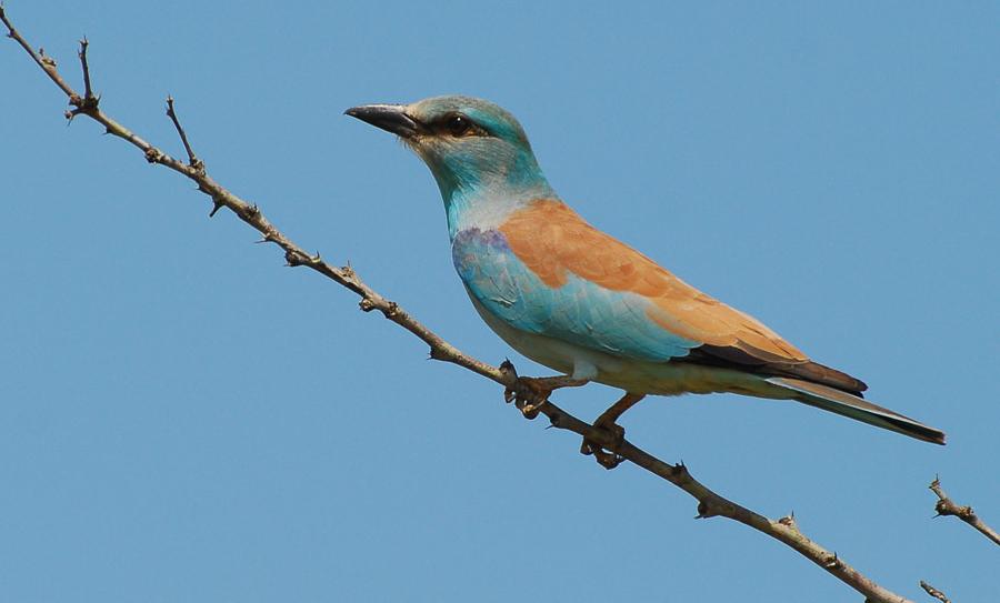 Vogels spotten Zuid-Afrika Ithala Game Reserve