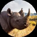 Hluhluwe iMfolozi Park Zuid-Afrika