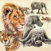 big-five-safari-zuidelijk-afrika