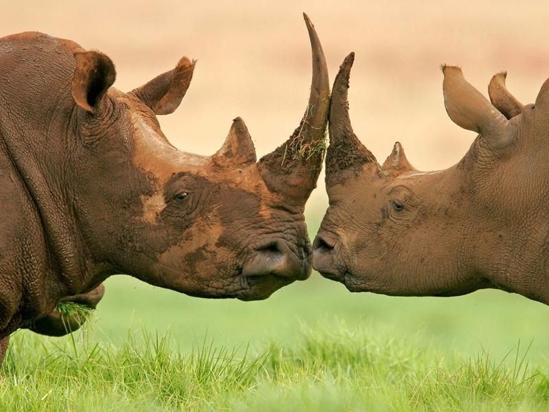 Manyeleti Game Reserve Zuid-Afrika