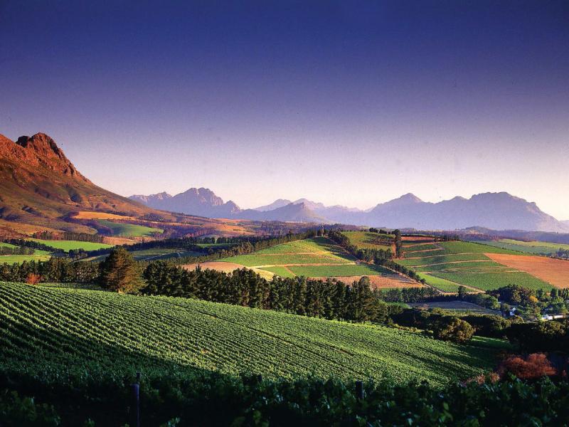 Cape WInelands Zuid-Afrika Wijngaarden