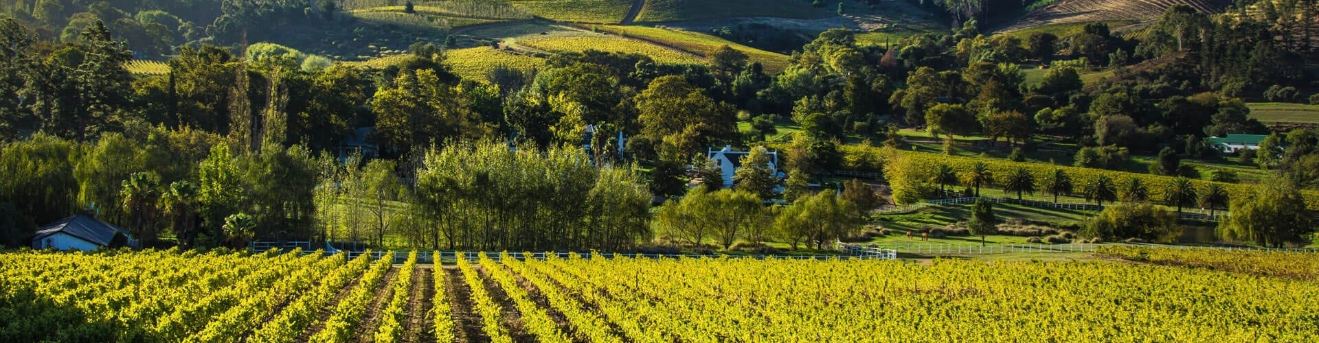 cape-winelands-south-africa