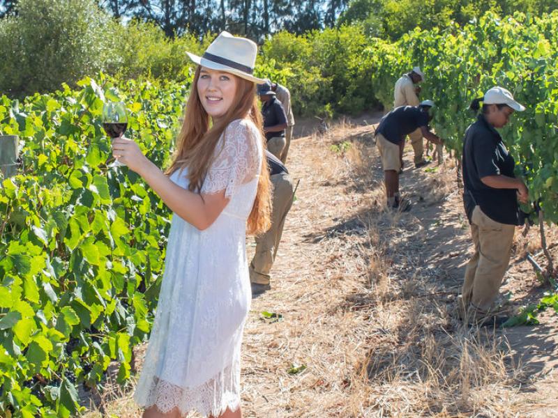 Cape WInelands Zuid-Afrika Proeven in de wijngaard