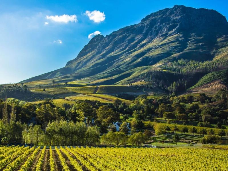 Cape WInelands Zuid-Afrika