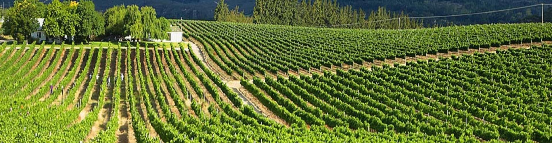 cape-winelands-zuid-afrika_2