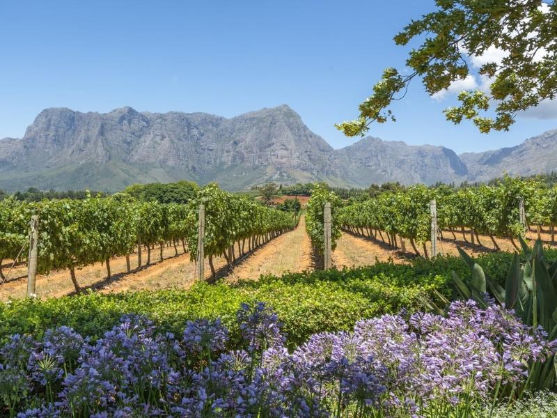 cape-winelands-zuid-afrika_3