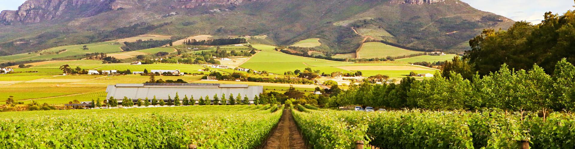 Wijnproeven Zuid-Afrika