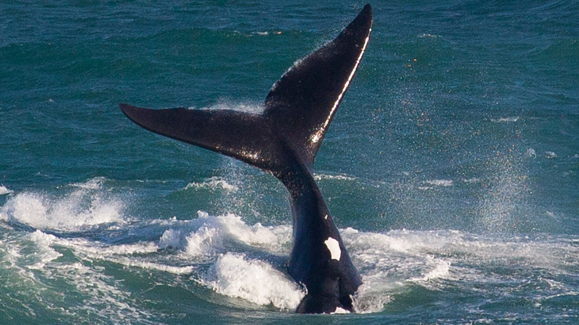 De Hoop Nature Reserve Zuid-Afrika Walvissen