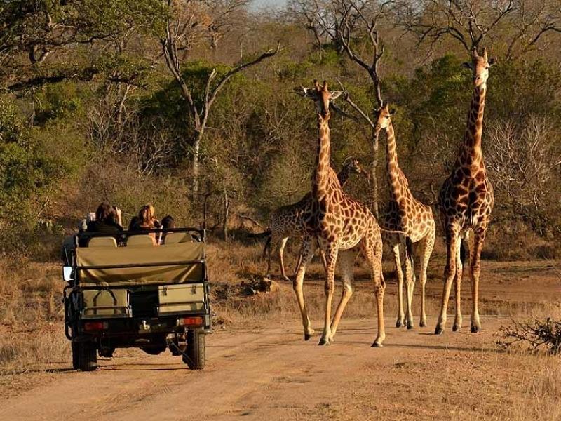 Thornybush Game Reserve Zuid-Afrika