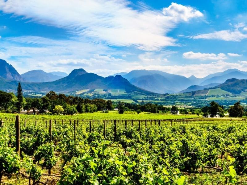 franschhoek-vineyards-cape-winelands