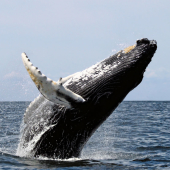 iSimangaliso Wetland Park Zuid-Afrika Whale Watching