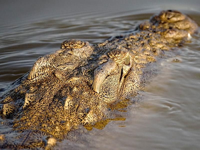 iSimangaliso Wetland Park Zuid-Afrika