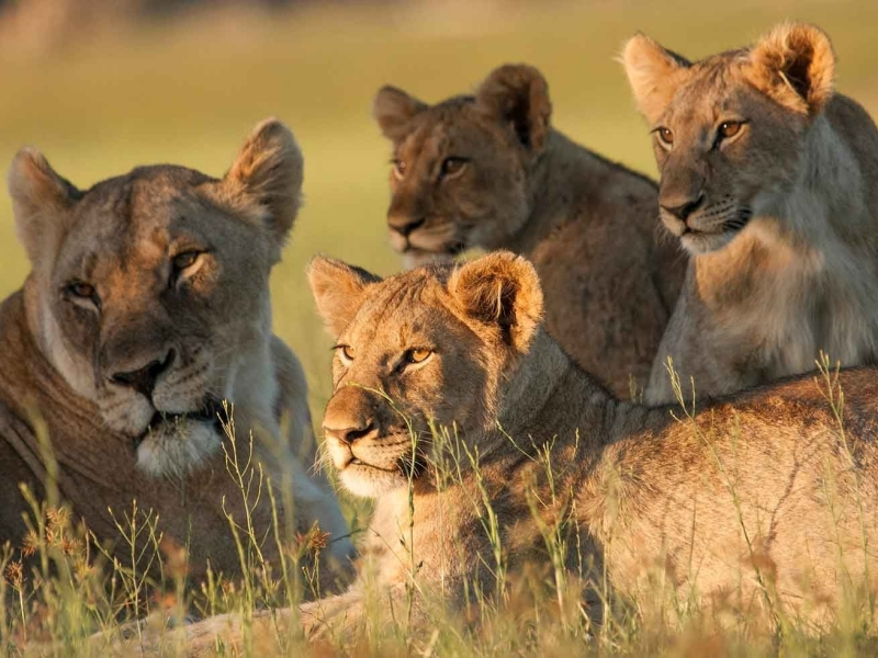 Kwandwe Private Game Reserve Zuid-Afrika