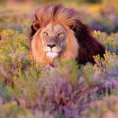 Video's over safri parken en lodges en natuurparken in Zuidelijk Afrika