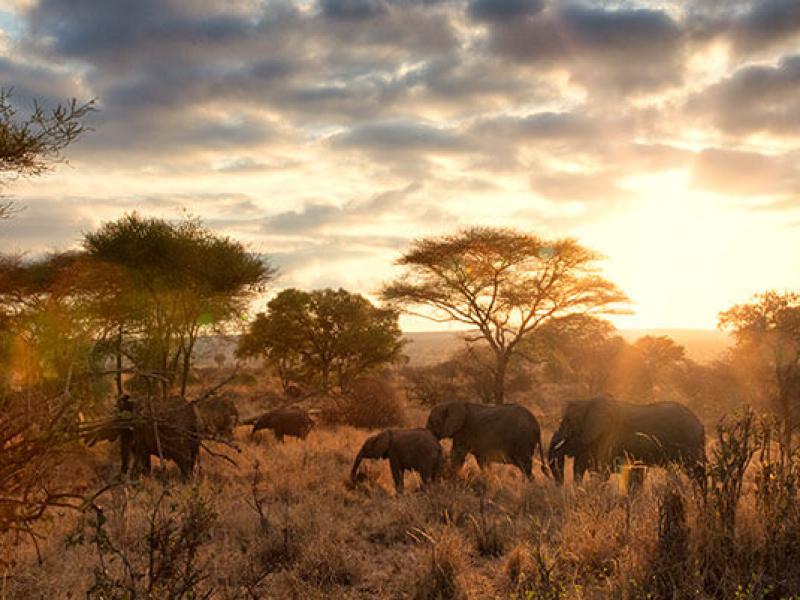 Entabeni Conservancy Game Reserve Zuid-Afrika