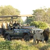 Game Drive tijdens safari in Zuidelijk Afrika