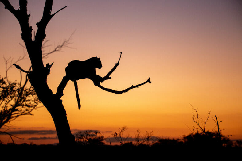 londolozi-game-reserve-is-gelegen-in-het-sabi-sands-game-reserve