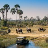 safarireizen-zuid-afrika-botswana-olifanten