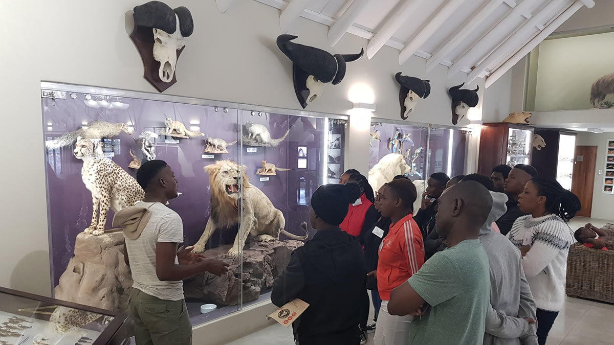Timbavati Game reserve Graeme Naylor Museum