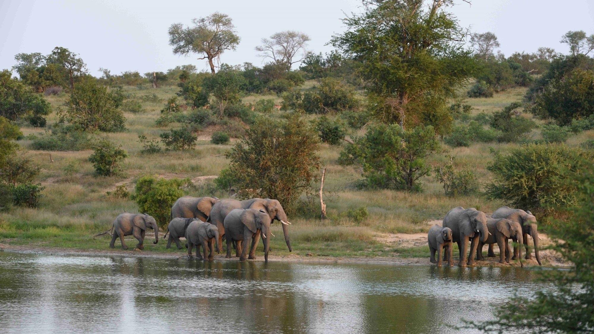 Timbavati Game Reserve Zuid-Afrika Olifanten
