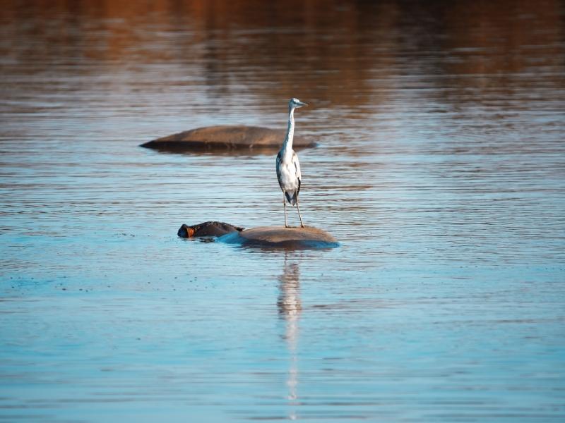 Vogels spotten Zuid-Afrika Mkhuze Game Reserve