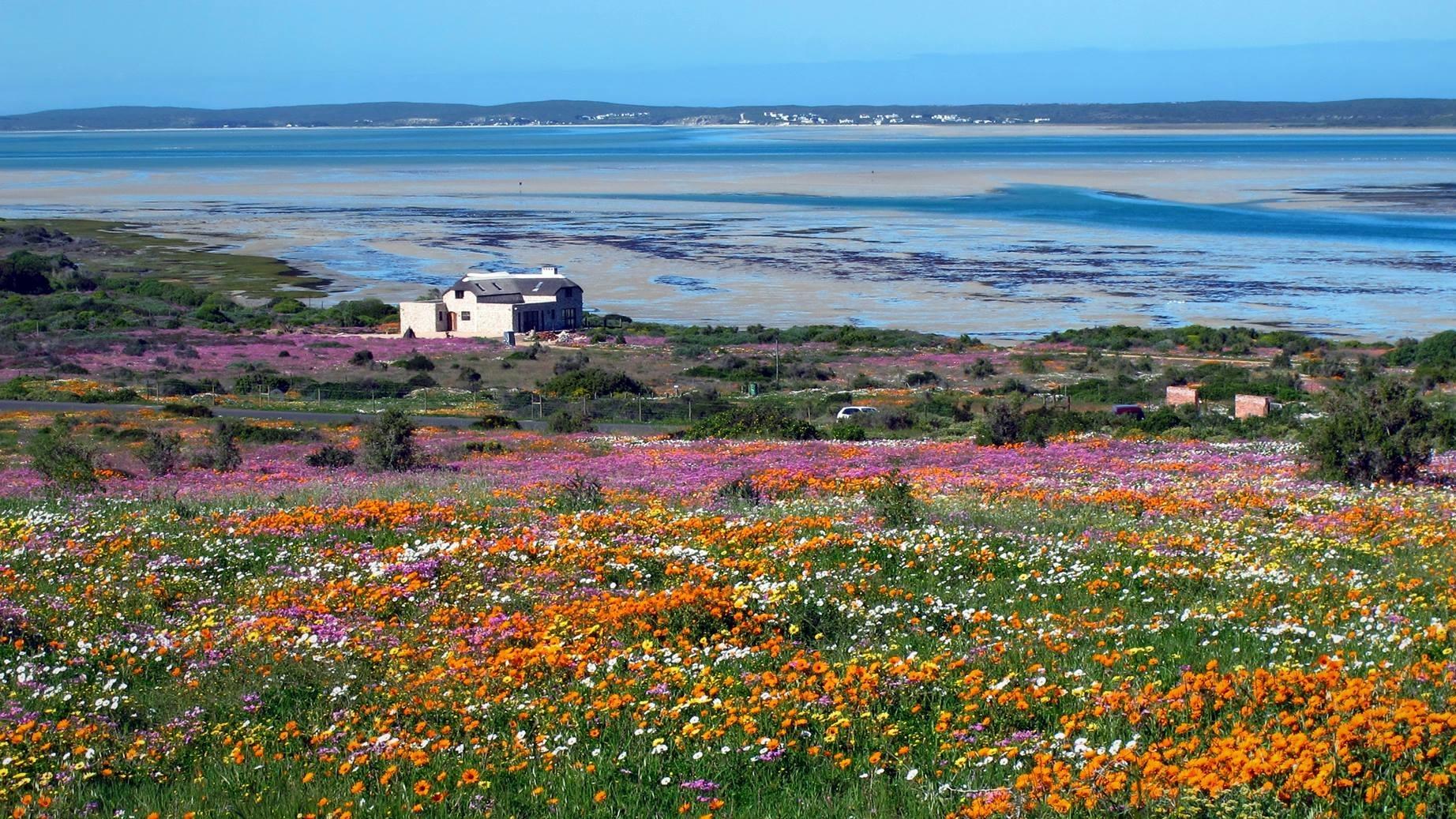 west-coast-national-park-postberg-flowers