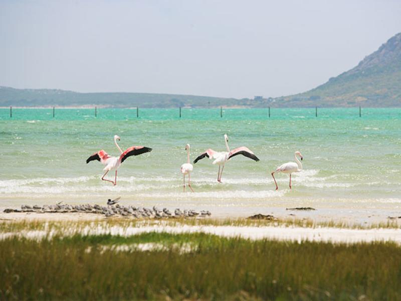 West Coast National Park Zuid-Afrika