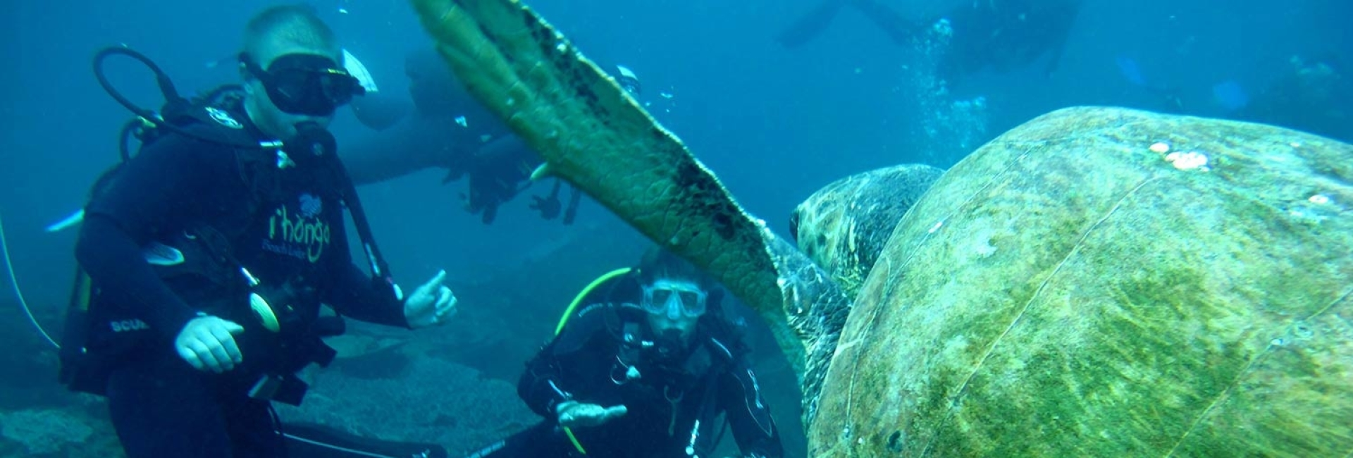 Zeeschildpadden Zuid-Afrika Tracking & Moitoring