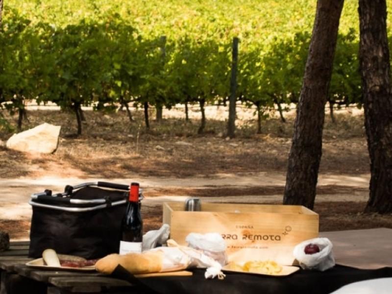 picknick in wijngaard