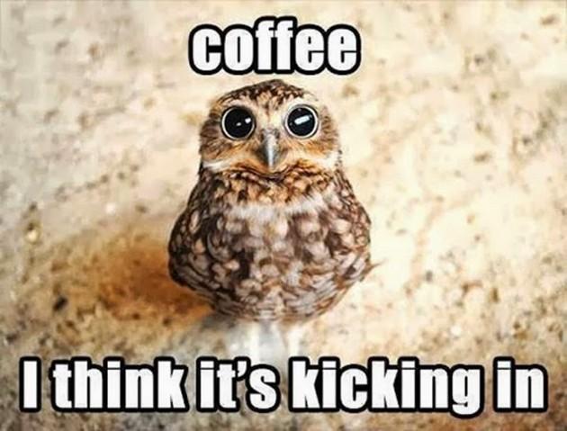 coffeeowl