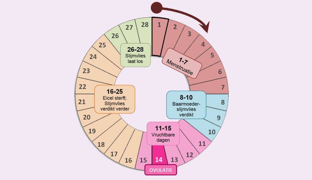 Menstruatiecyclus Fitgirls