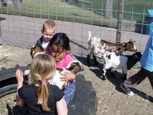 knuffelen kinderboerderij raalte