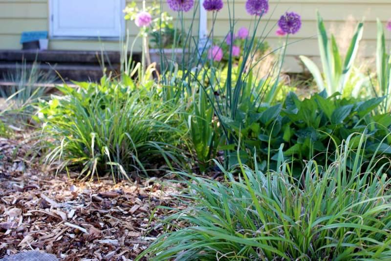 Houtsnippers in de tuin