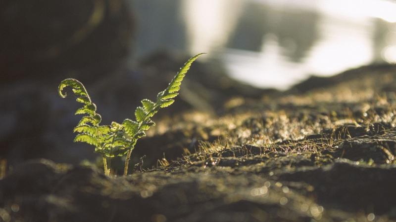 Grond verbeteren tuin