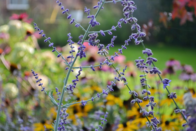 Bloemen | Tuin inspiratie