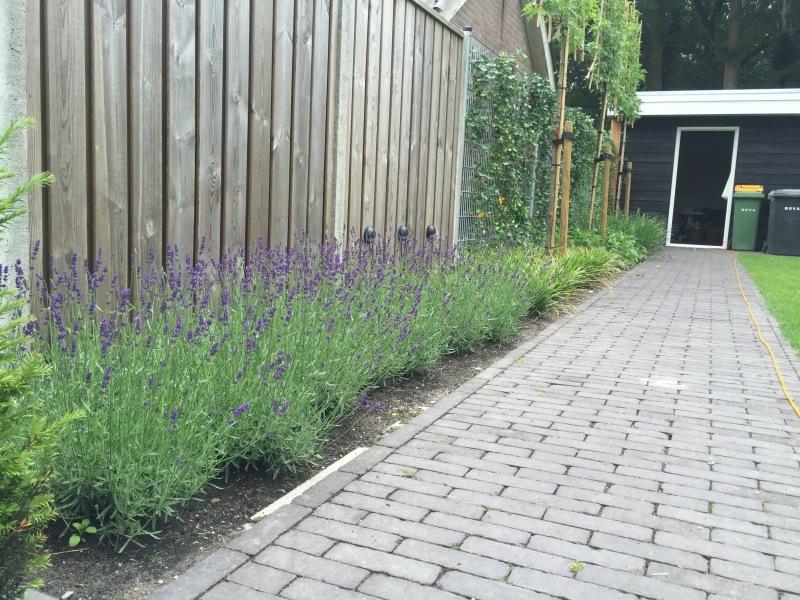 Bestrating in tuin