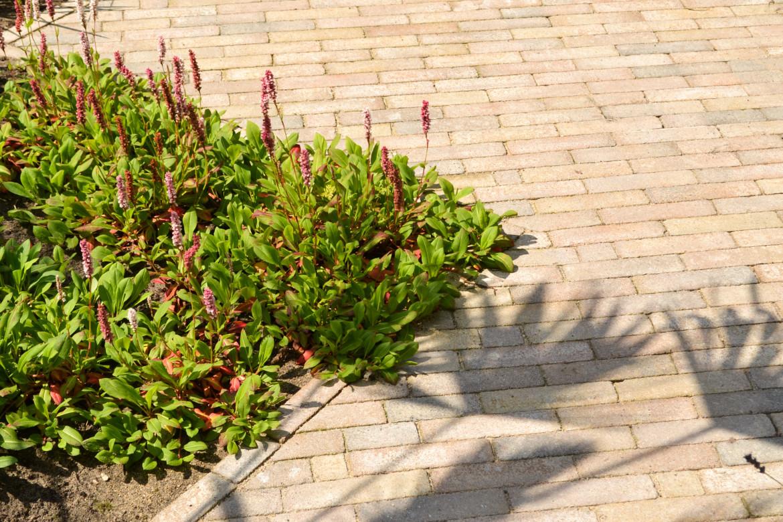 Bodembedekkende planten | Tuin inspiratie