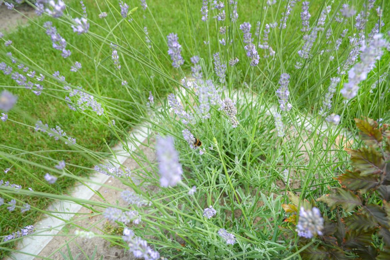 Bijen | Diervriendelijke tuin