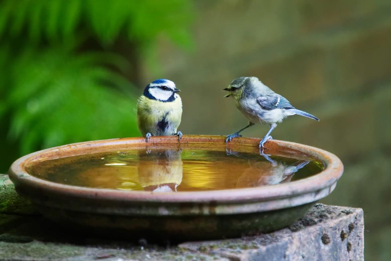 Vogels | Diervriendelijke tuin