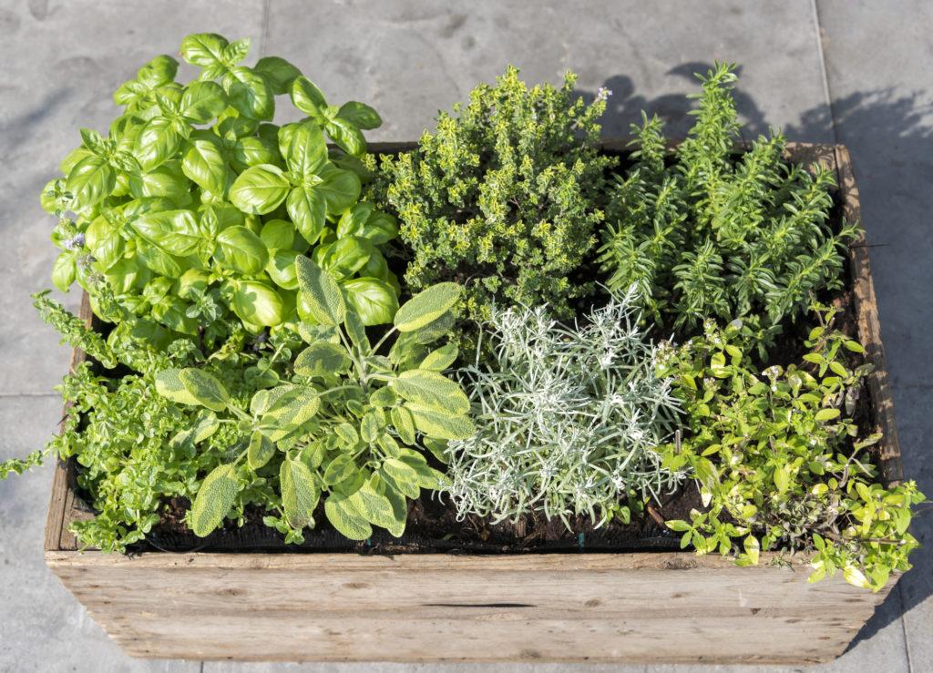hoe plant ik zelf kruiden in mijn eigen kruidentuin