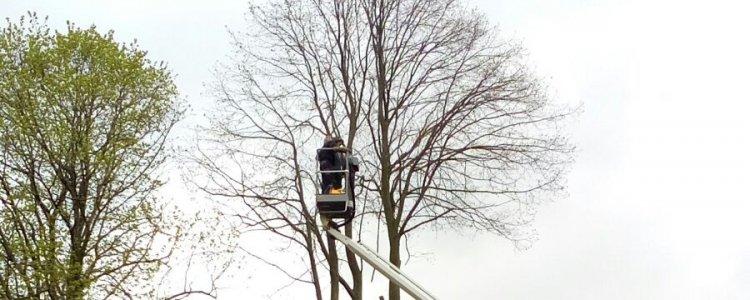 wanneer bomen snoeien