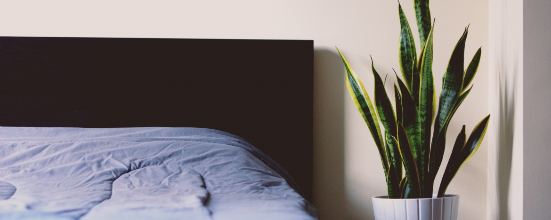 4 Planten voor in de slaapkamer